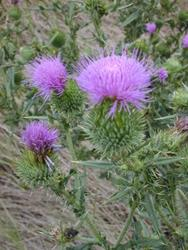 Click to view album: Noxious Weed